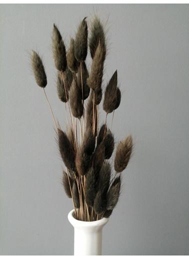 Kuru Çiçek Deposu İthal Pamuk Otu (Lagurus) Kahverengi Kahve